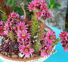 Crassula Flowers by Rewards4life