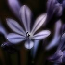 blossom by Heike Nagel