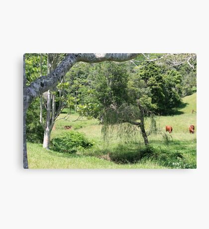 Peace in Tallebudgera Valley Canvas Print