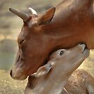 Mom & Newborn in a Blissful Moment by Joe Jennelle