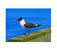 Sitting on the Dock of the Bay Art Print