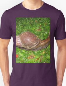 Cool Giant African Land Snail
