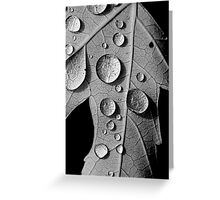 Maple Drops Greeting Card