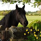 A curious Linnel Fell mare by Fleur Hallam