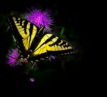Swallowtail Butterfly by Charles & Patricia   Harkins ~ Picture Oregon