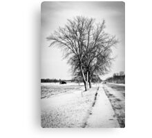 Two Trees Metal Print