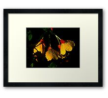 Night Lights 2 Framed Print
