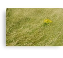 Soft Meadow Canvas Print
