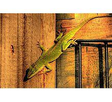 My Chameleon Friend Photographic Print
