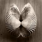 Shell by Jay Reed