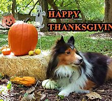 Sheltie Thanksgiving by jkartlife