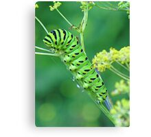 Fennel Eater Canvas Print