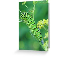 Fennel Eater Greeting Card