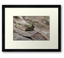 Little Creature In A Big World Framed Print