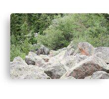 Rocks Among The Shrubs Canvas Print