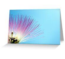 Pink Mimosa Greeting Card