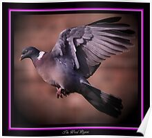 The Wood Pigeon Poster