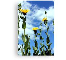 Looking Up - Yellow + Blue = Green Canvas Print