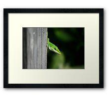 Sneak Framed Print