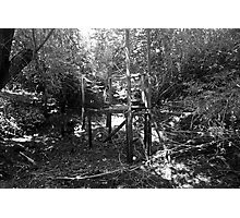 Bridge to the Green Photographic Print