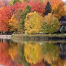 colors of fall by Manon Boily