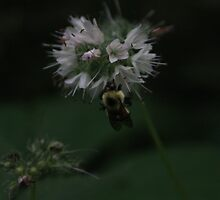 Bumble Bee by Tracy Jansen
