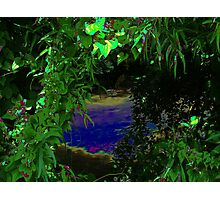 Private Jungle Photographic Print