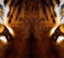 Amur Stare by ANWPhotography