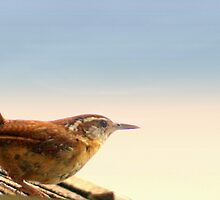 Wren On the Roof by AuntDot