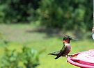 Hummer Summer 1 by WalnutHill