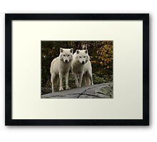 Curious pair Framed Print