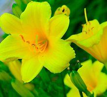 Sunken Gardens Flowers by Christopher Hanke