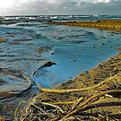 The beach comes alive - Coos Bay, Oregon by Doty