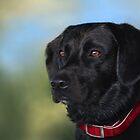 Black Lab - Dog Portrait by Renee Dawson