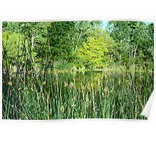 Bushy Lake Wetlands Poster