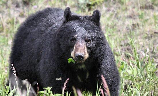 Salad Baaar (American Black Bear) by Leslie van de Ligt