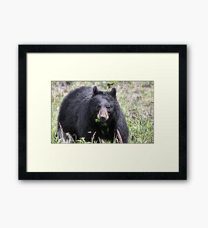 Salad Baaar (American Black Bear) Framed Print