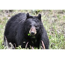 Salad Baaar (American Black Bear) Photographic Print