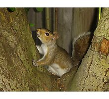 Squirrel in Tree 2 Photographic Print