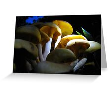 Looking For  Bioluminescence Greeting Card