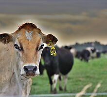 Dairy New Zealand by coffeebean
