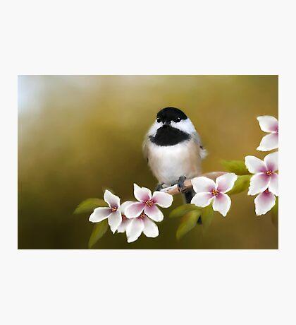 Apple Blossom Chickadee Photographic Print