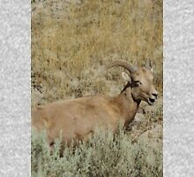Big Horn Sheep Unisex T-Shirt