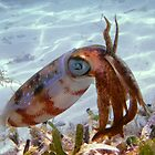 Caribbean Reef Squid in Dry Tortugas by thatche2