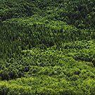 Forest Pattern by Olga Zvereva