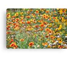 A Painted Field Canvas Print
