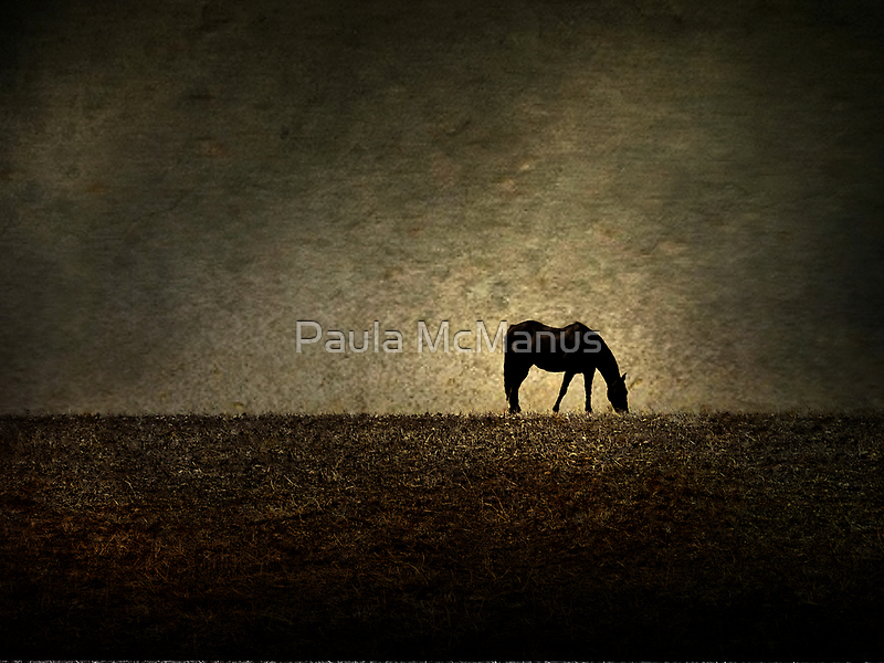 Hilltop Grazing by Paula McManus