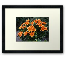 Splash of Colour - 'Victory Joy' Lilies Framed Print