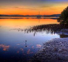 Mangrove Magic by Ian English