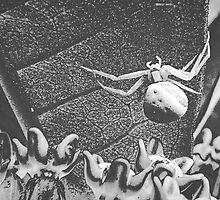Spider by sillyfrog